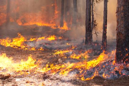 שריפות והתחממות גלובלית